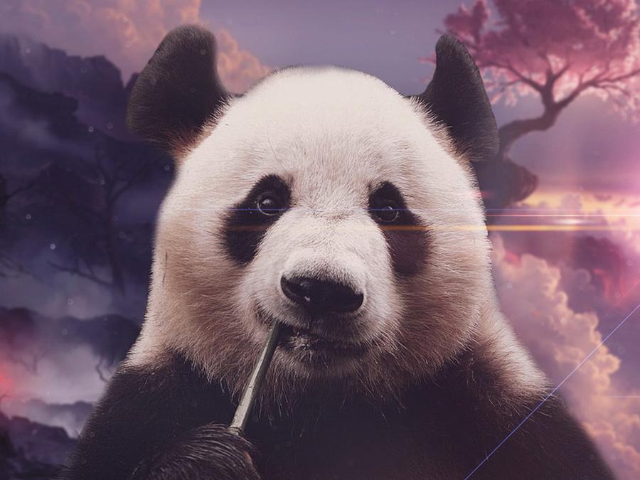 英文名称:Giant panda),属于食肉目、熊科、大熊猫属的一种哺乳动物,体色为黑白两色,它有着圆圆的脸颊,大大的黑眼圈,胖嘟嘟的身体,标志性的内八字的行走方式,也有解剖刀般锋利的爪子。是世界上最可爱的动物之一。大熊猫已在地球上生存了至少800万年,被誉为活化石和中国国宝,世界自然基金会的形象大使,是世界生物多样性保护的旗舰物种。 B、兔(英文:Rabbit)兔是哺乳类兔形目兔科下属所有的属的总称。俗称兔子,(Rabbit);生物学分类动物界(Animalia )脊索动物门 (Chordata)