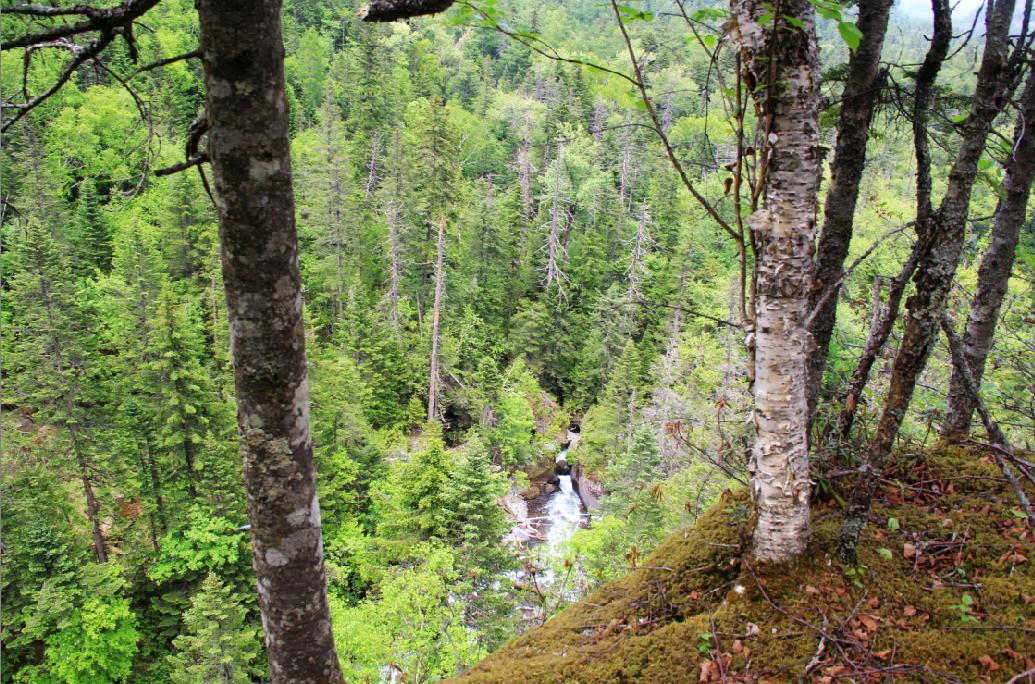长白山峡谷森林