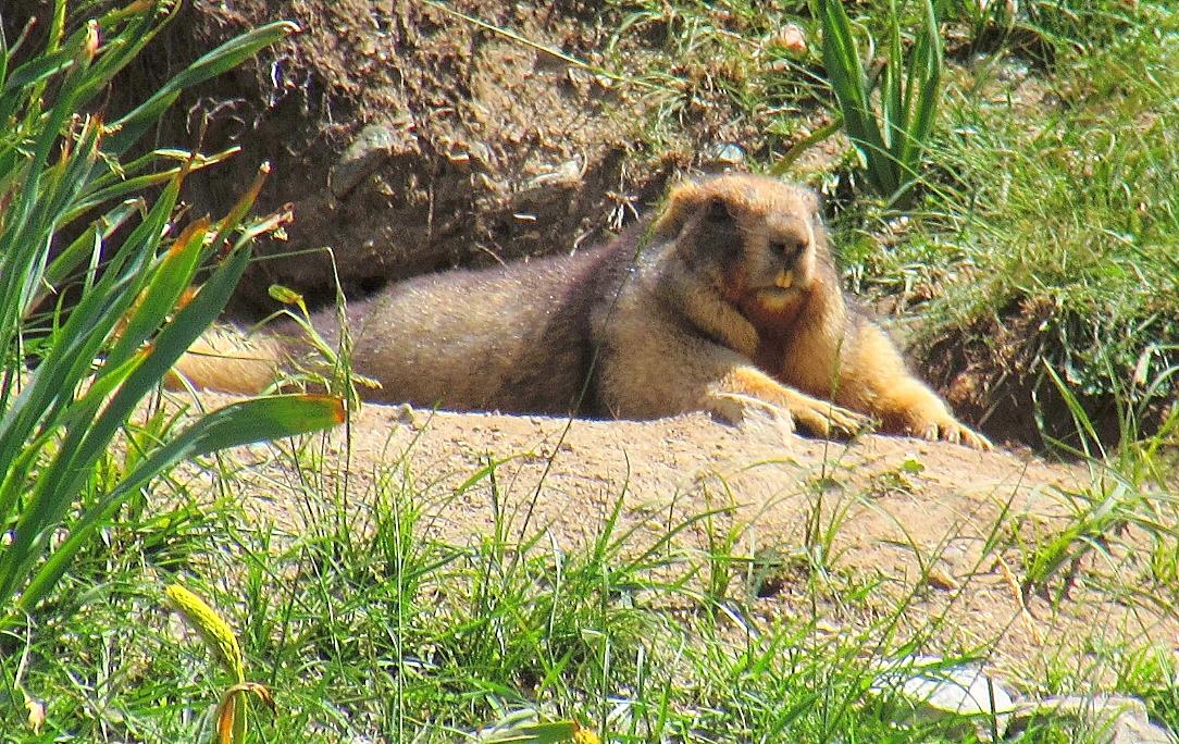 【生态动物】草原上的小动物