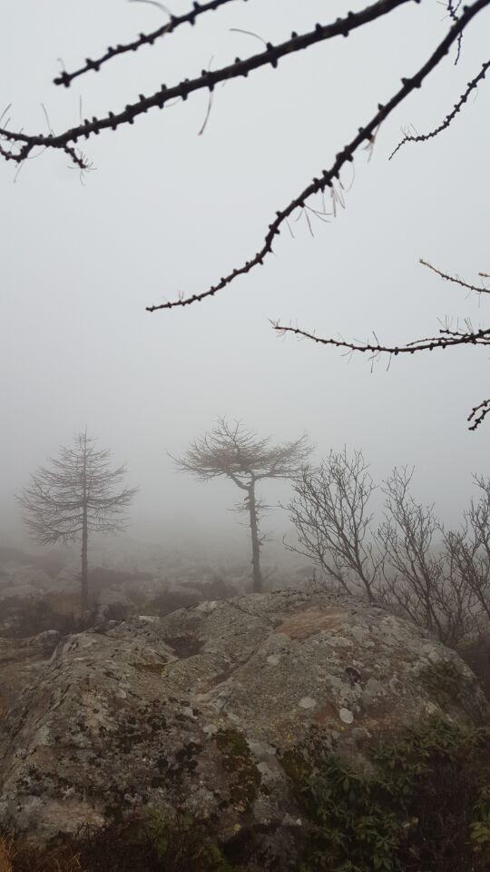 出发后的树木景色.jpg