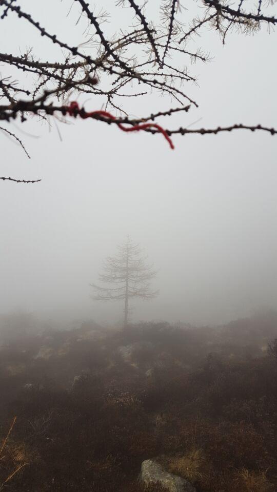 出发后的树木景色2.jpg