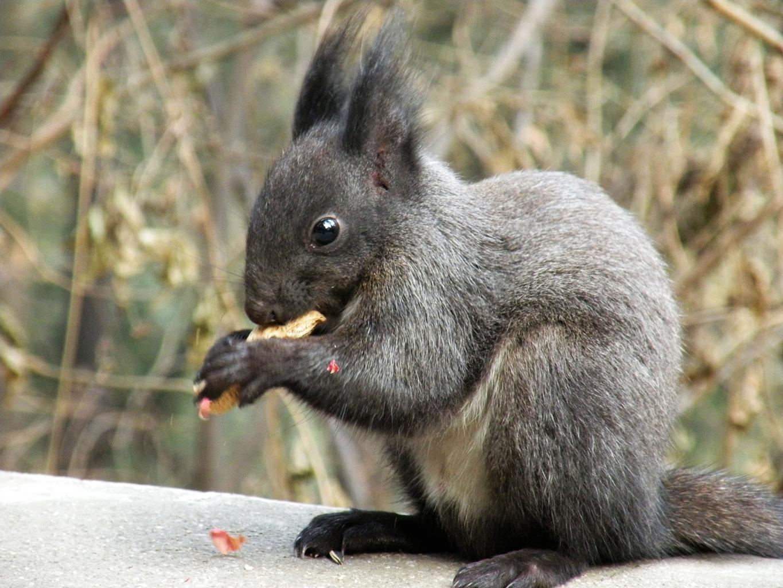 贪吃的小松鼠