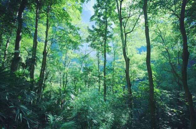 地下森林.jpg
