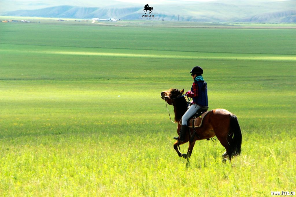 horsebackno503.jpg