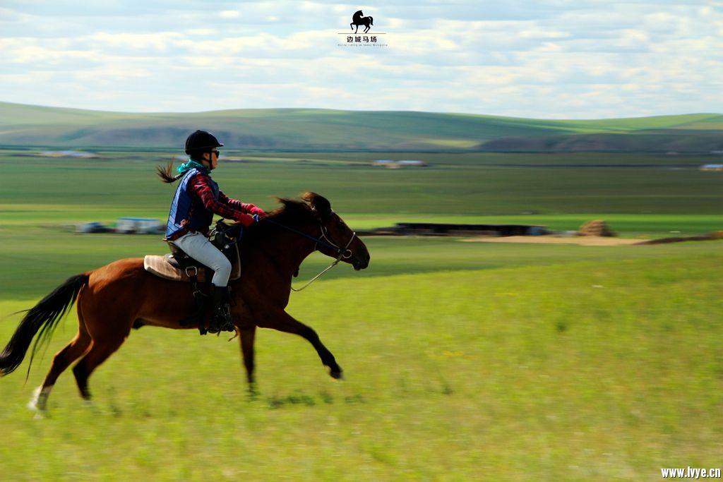 horsebackno504.jpg
