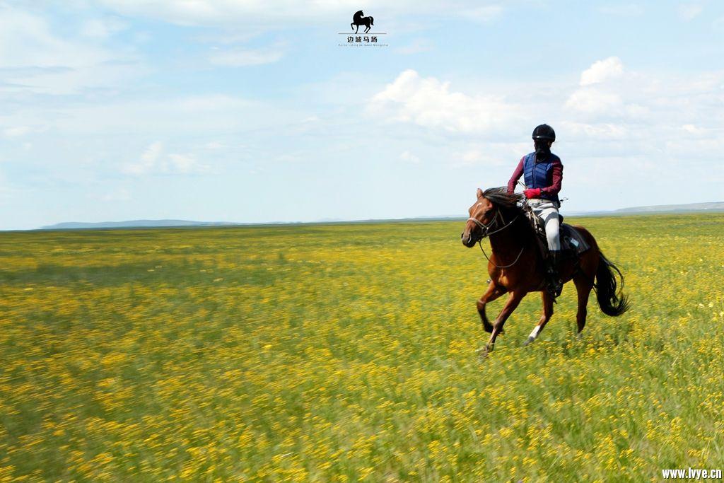 horsebackno508.jpg
