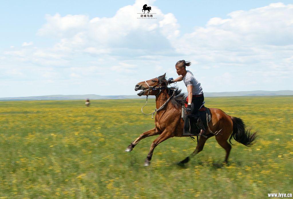 horsebackno510.jpg