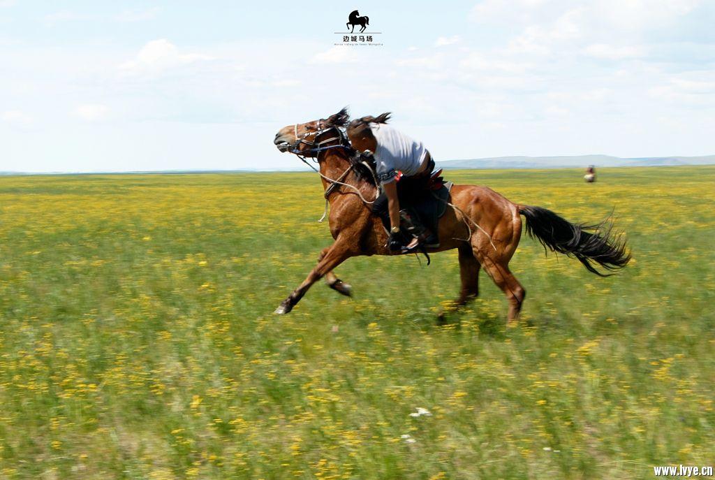 horsebackno511.jpg