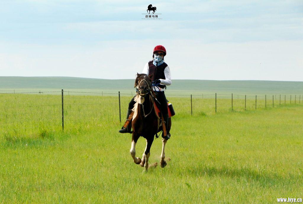 horsebackno513.jpg