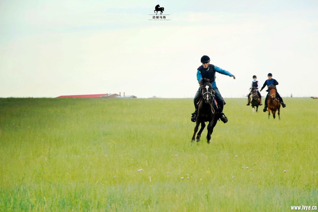 horsebackno516.jpg