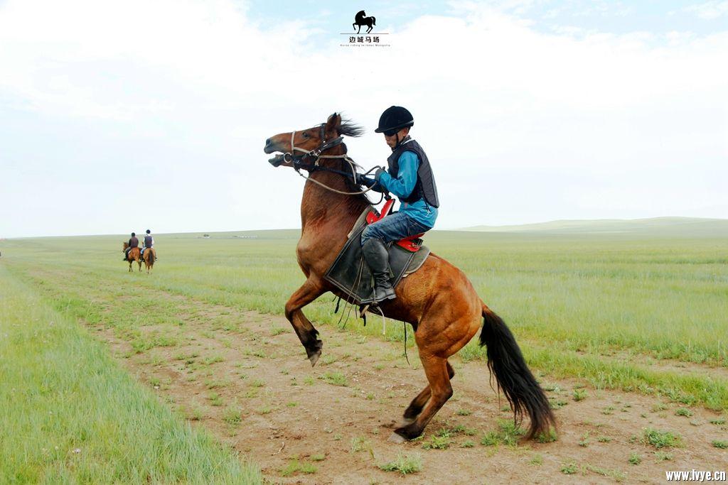 horsebackno517.jpg