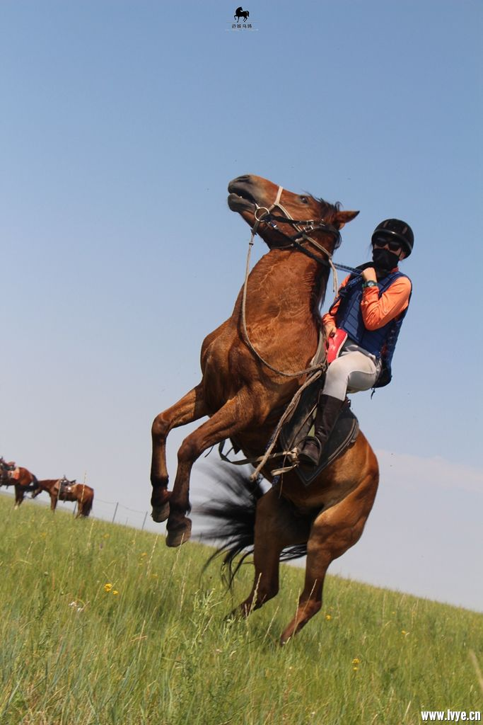 horsebackno518.jpg