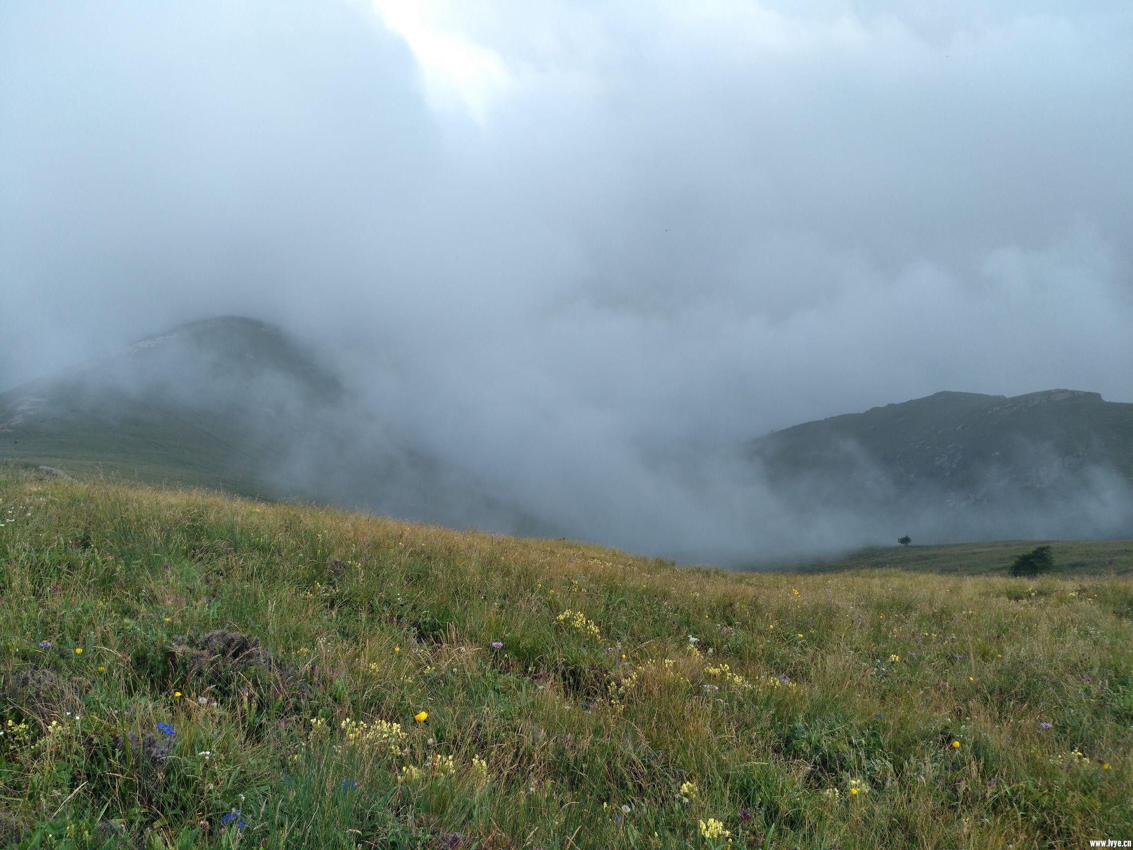 云雾中的高山花甸