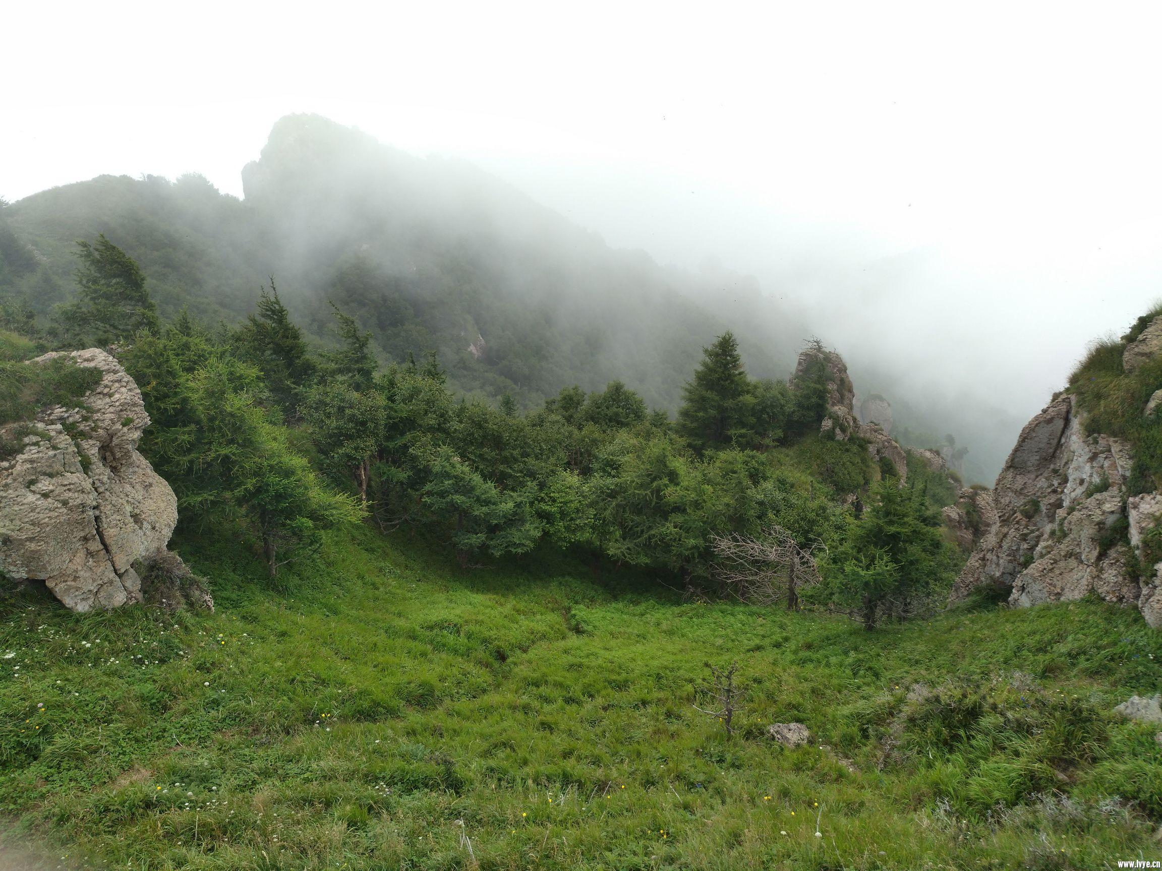 山谷的松林