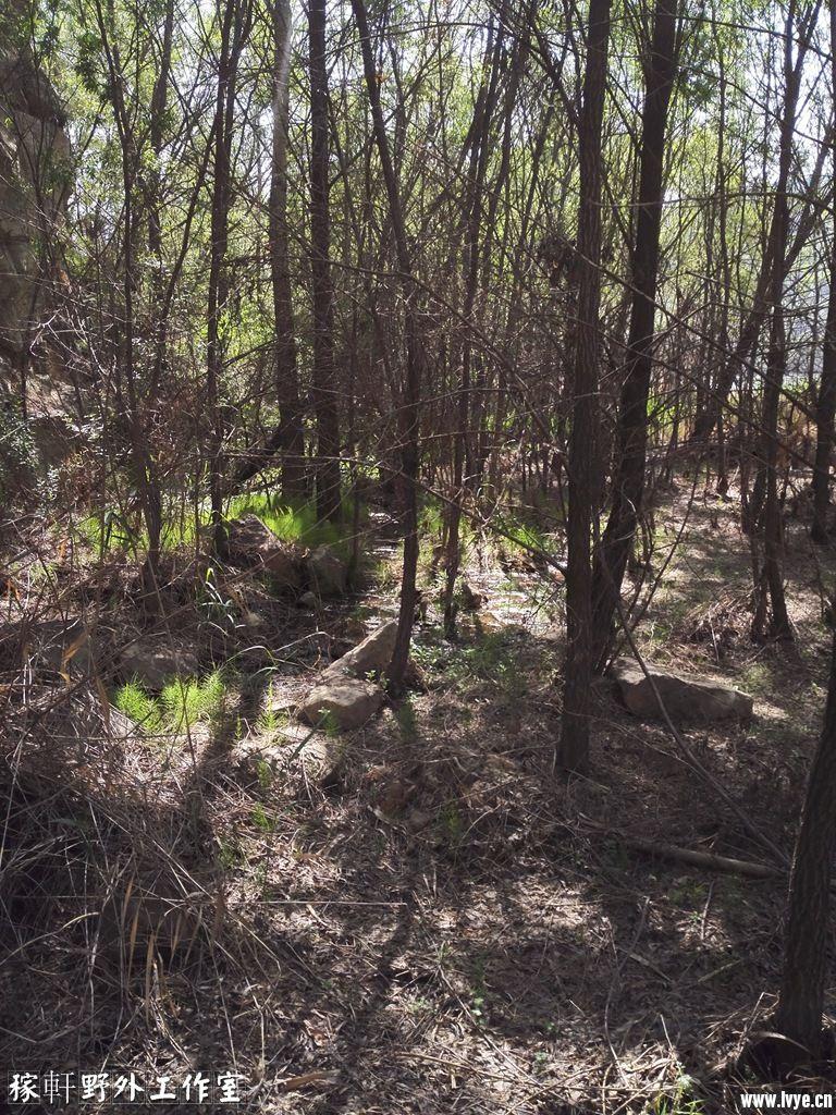 023林中的大青石.jpg