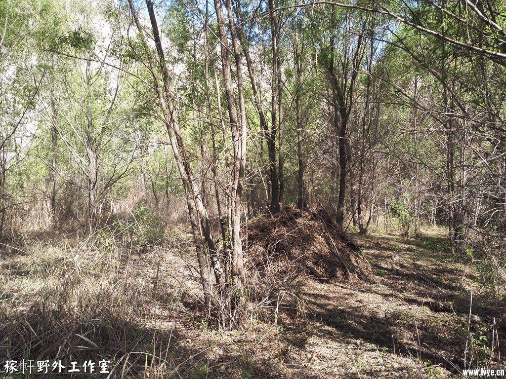 025B林中的庇护所.jpg
