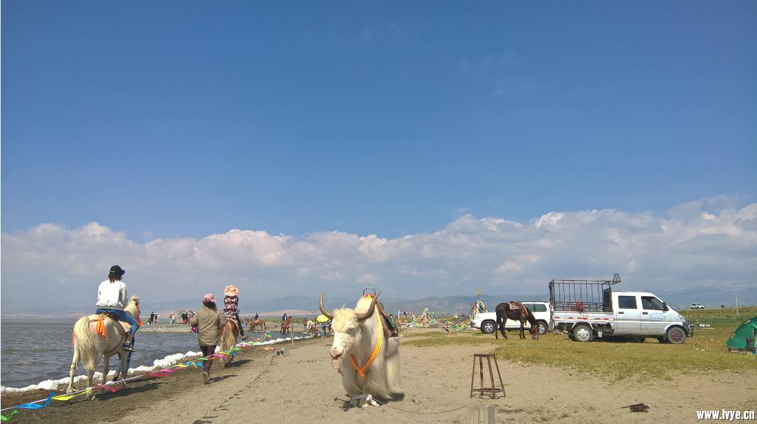 青海湖023.png