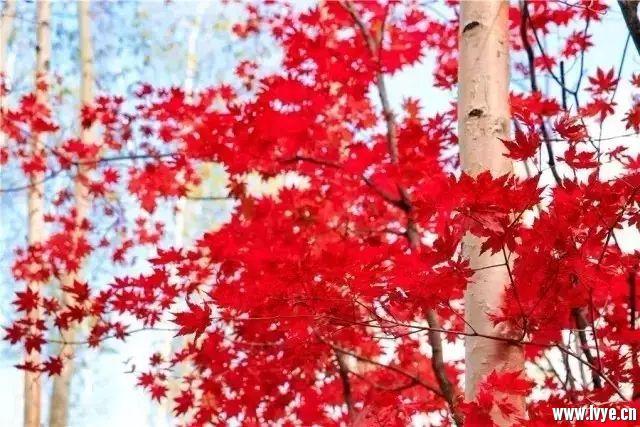秋天里.jpg