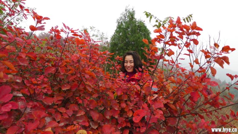 【宇宙户外】10月27日周四金秋赏红叶香山小环遛达