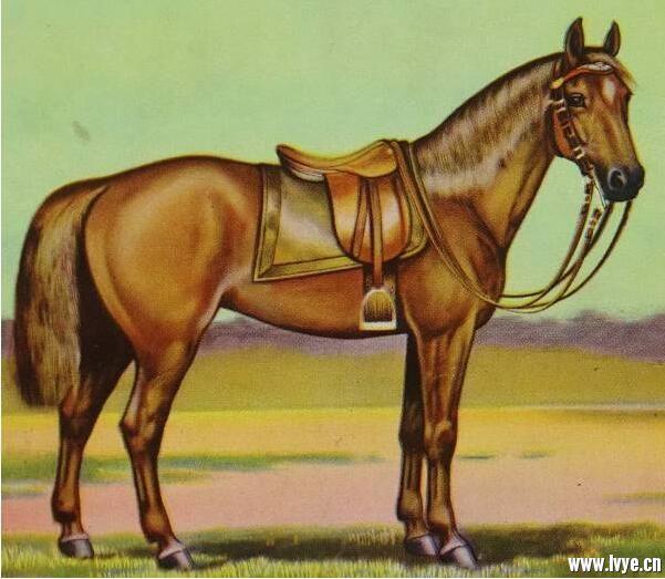 马场短途轻型鞍