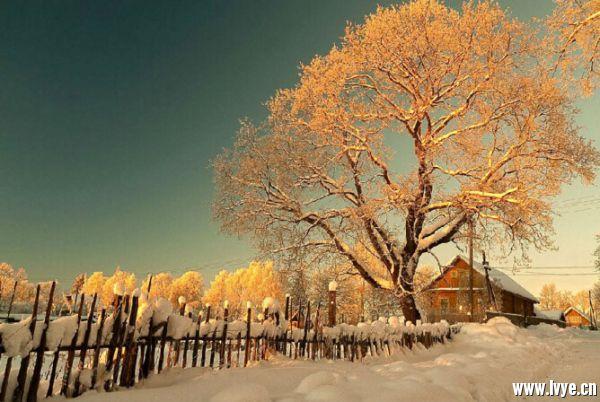 保护树木防止冻伤