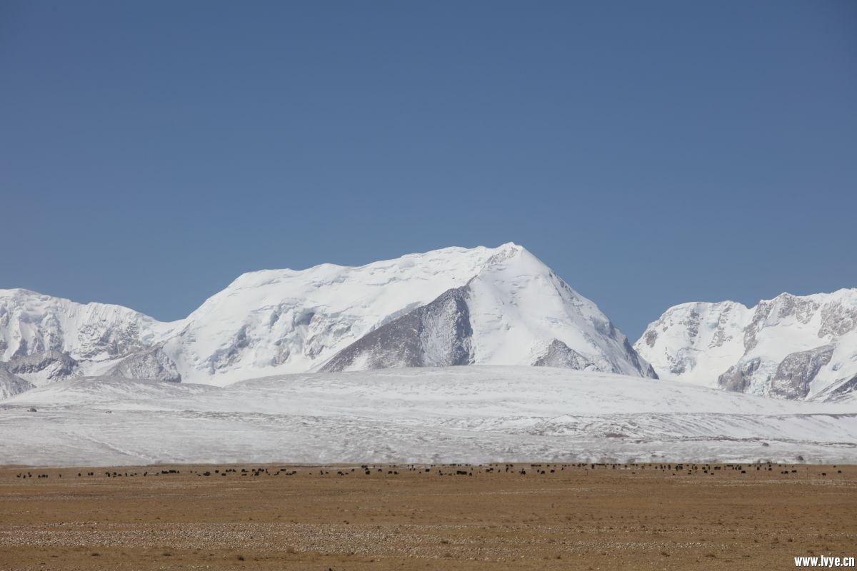 希夏邦玛峰12.JPG