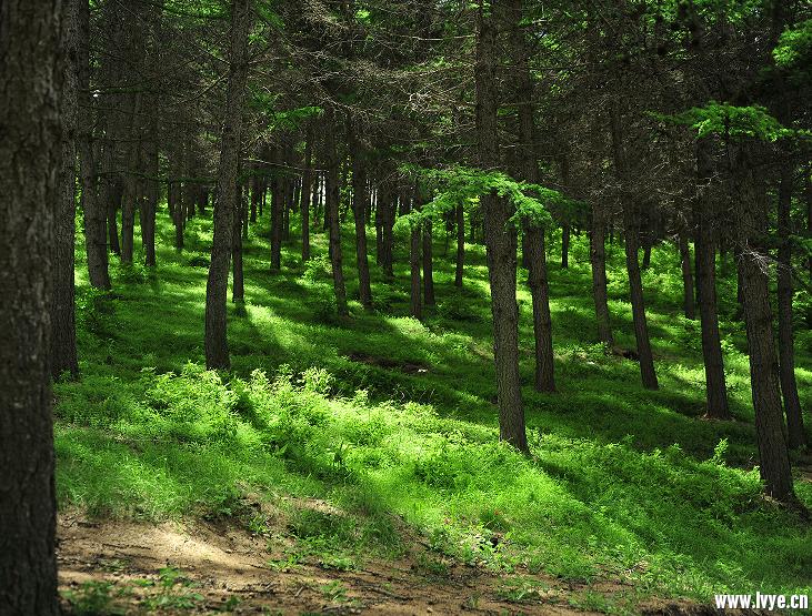 森林.png