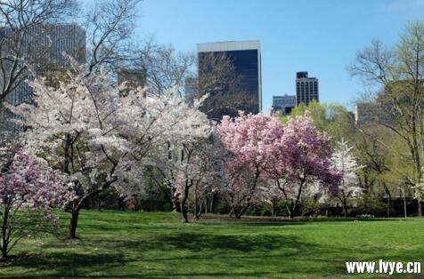 美国纽约中央公园.jpg