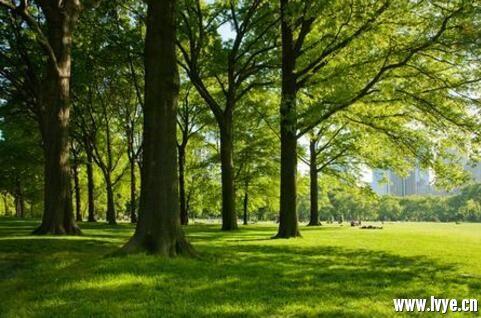 美国纽约中央公园1.jpg