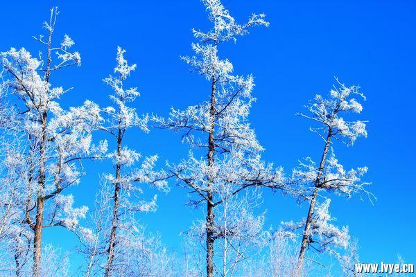 漠河冬季图片 (5).JPG
