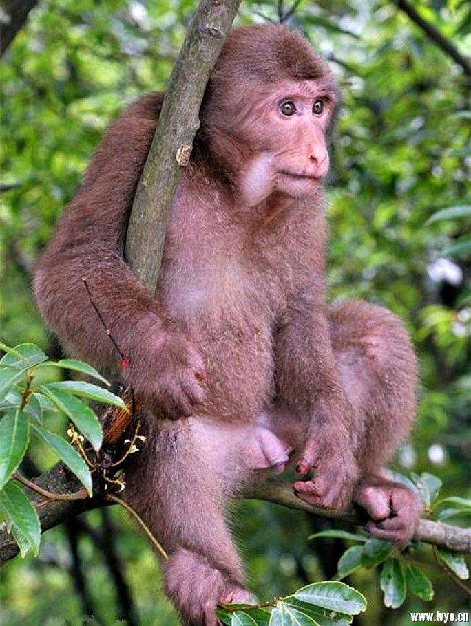 猕猴.jpg