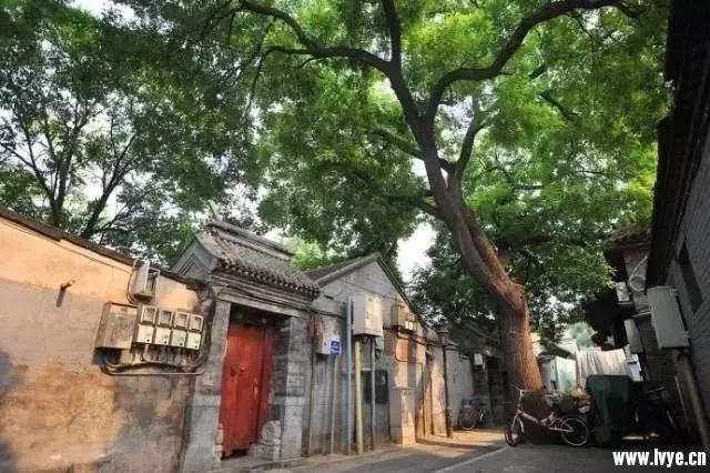 北京是一个三十五岁没结婚都不嫌晚的地方。.webp (1).jpg