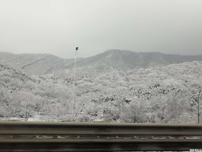 兰心姐发的这张图片瞬间让我心动了。白雪皑皑  一望无际有点林海雪原的样子 ... ... ...