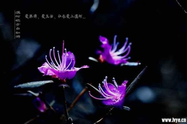 漠河旅游春天风景 (5).jpg