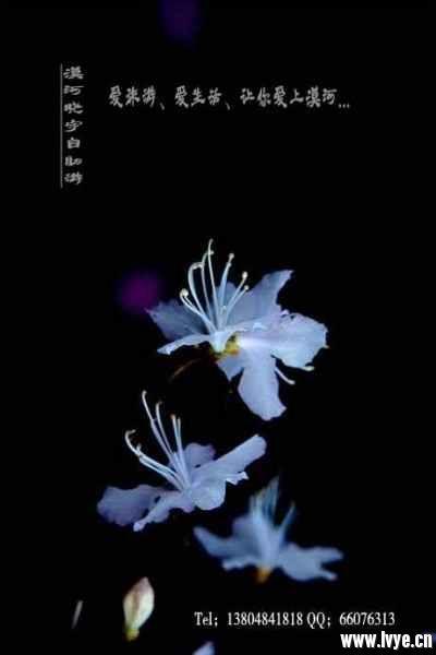 漠河旅游春天风景 (6).jpg