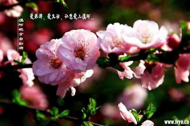 漠河旅游春天风景 (11).jpg