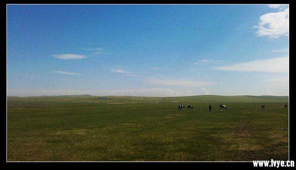 草原上的牛.jpg