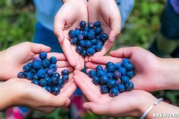 蓝莓图.jpeg