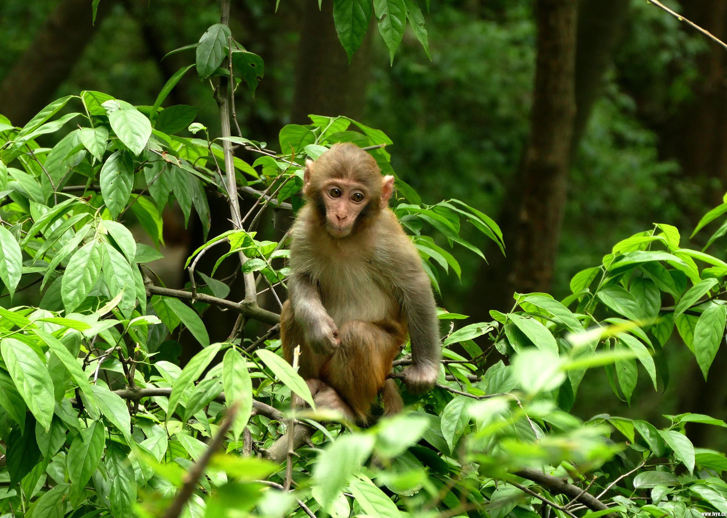 1524354006_IMG_2923小猴子.jpg