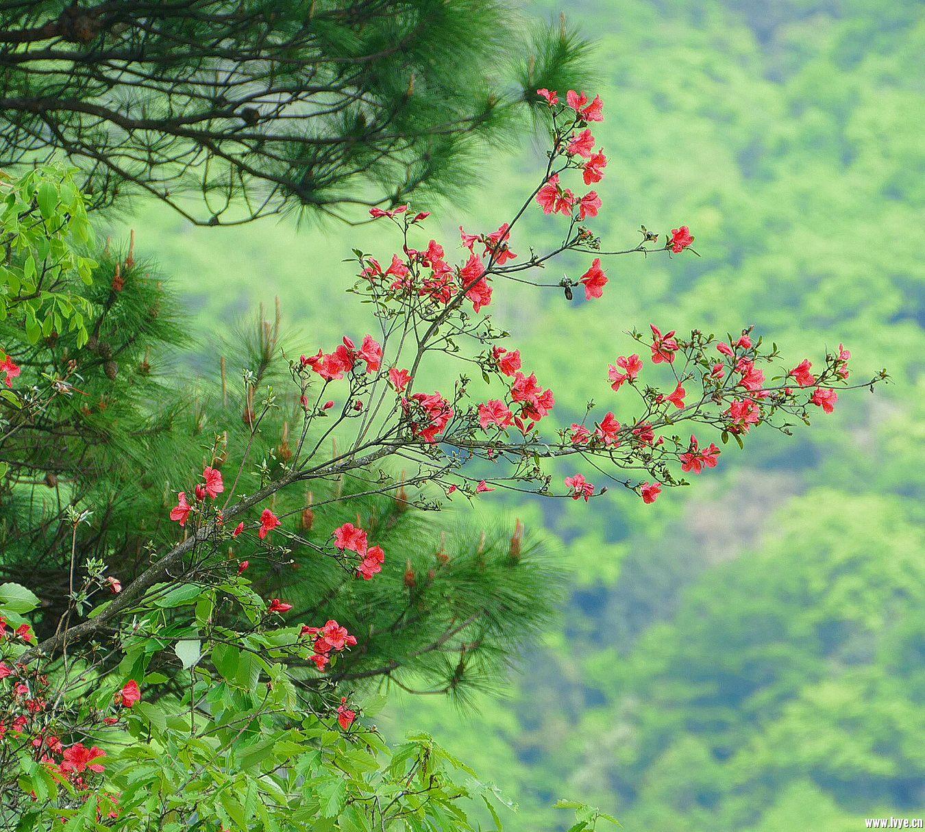 山中的那一抹红