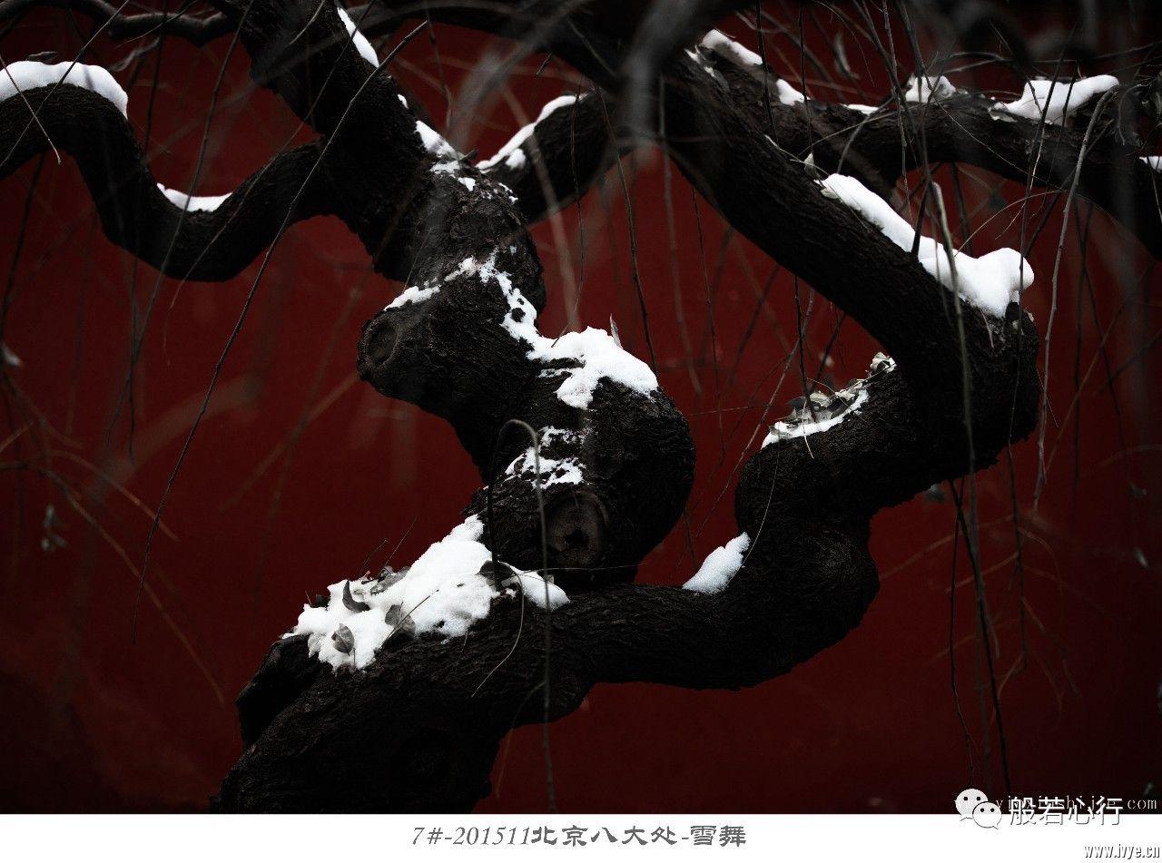7#-201511北京八大处-雪舞.jpg