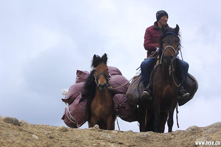 驼我们行李的马匹