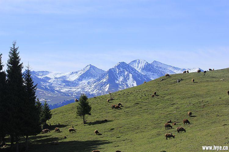 牛羊满地跑