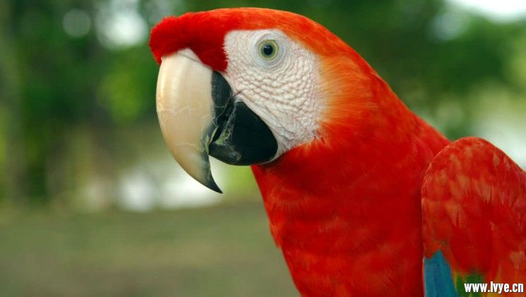 40_745_420_macaw_amazon_cruise_crp_mini.jpg