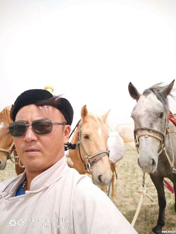 从自己马群精选三匹蒙古马