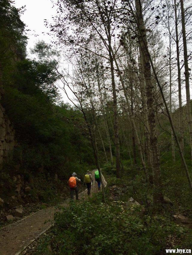 开始树林中行走1.jpg
