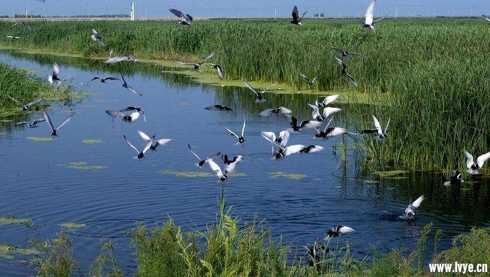 湿地3.jpg