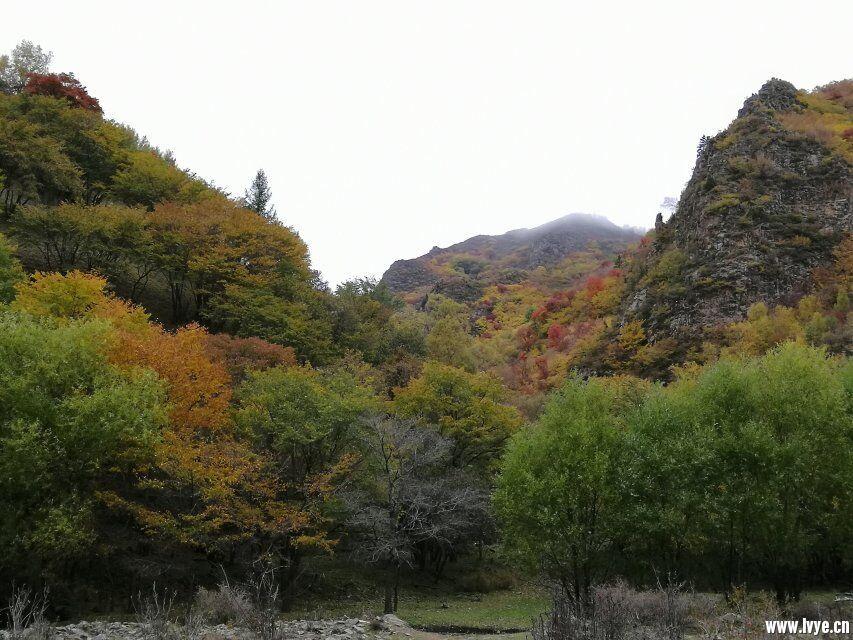 早晨营地风景3.jpg