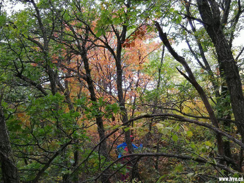 东猴顶附近爬山1.jpg