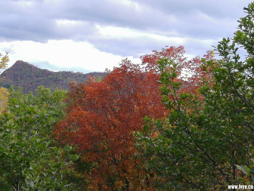 东猴顶附近爬山风景3.jpg